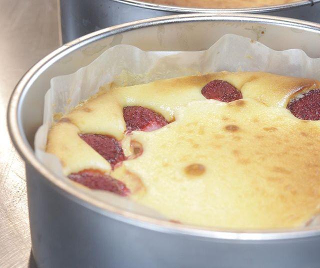 苺のベイクドチーズケーキイベント帰宅してすぐ焼きました明日の朝カットしてお持ちします♡#コーヒーのある暮らし #シフォンケーキ作り #よろしくお願いします #美味しいもの #ベイクドチーズケーキ#苺#チーズケーキ部 #イベント出店#ムサシ朝市#焼き菓子販売#pieces焼き菓子コーヒーとホワイトチョコチップのシフォンケーキも焼きました。10カット限定です。シフォンケーキはチョコレートせとかバニラコーヒーとホワイトチョコチップです。