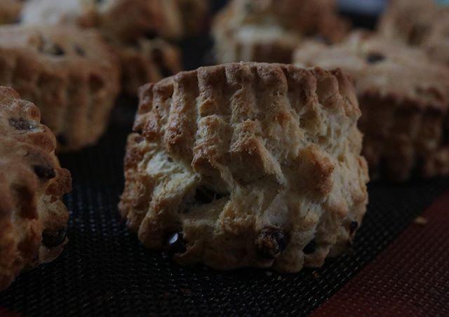 7/15 (月)和歌山シュシュマーケットスコーンは、、、チョコチップせとか×ホワイトチョコ苺×ホワイトチョコプレーン桑の葉チーズケーキは、プレーンマンゴー 石垣島桃  和歌山3種と瓶入りチーズケーキです。いよいよ明後日!よろしくお願い申し上げます。瓶入りチーズケーキ #ジャム #ジャム作り #ジャム部#スコーン#チョコチップスコーン#さくさく#ほろほろ