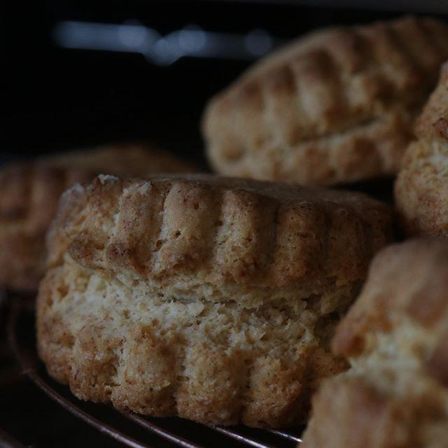 スコーンは3種類写真はプレーン (大山こむぎ)全粒粉入り プレーン桃とクリームチーズせとかとクリームチーズバターの香りがたまらなく美味しい!コーヒー️紅茶、チャイにもぴったり!うちのスコーンは暑いけど口の中の水分もってかれないよ。シフォンケーキ明日は6種プレーンmoto vegetable firm さんのトウモロコシきな粉桃桃とカモミール#eat local kobe#ファーマーズマーケット#東遊園地#朝市#マーケット#マルシェ#焼き菓子#pieces焼き菓子#シフォンケーキ#ベーキングパウダー不使用#卵の力#北坂養鶏場#淡路島#おいしいよ#季節を感じられる焼き菓子#ほろほろスコーン#全粒粉入り#大山こむぎ#こむぎ